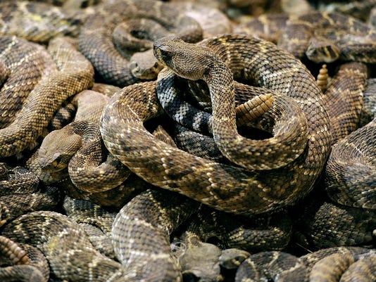 RattlesnakeRdp.JPG