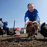 Phillip Tompkins tries to catch a chicken April 6 at a Rent The Chicken operation in Mount Holly, N.J. Poultry leasing has turned out to be a serious investment as more people want fresh eggs from humanely raised hens, without the responsibilities of ownership.