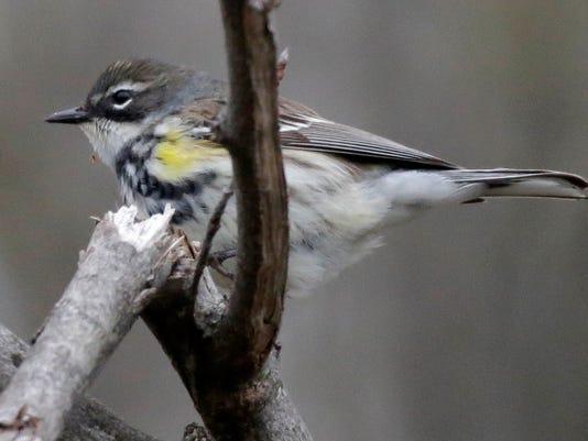 635988441512442019-she-n-Int-l-Migratory-Bird-Day--Maywood-0514-gck-06.JPG