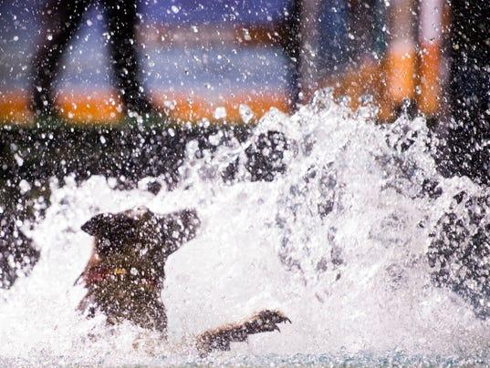 kns-dock dogs