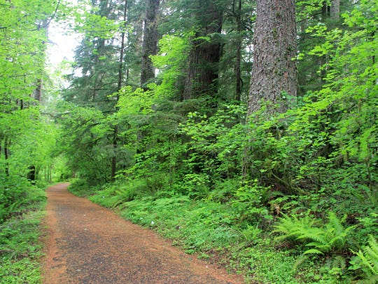 The 4-mile paved bike trail winds through lush forest at Silver Falls State Park.