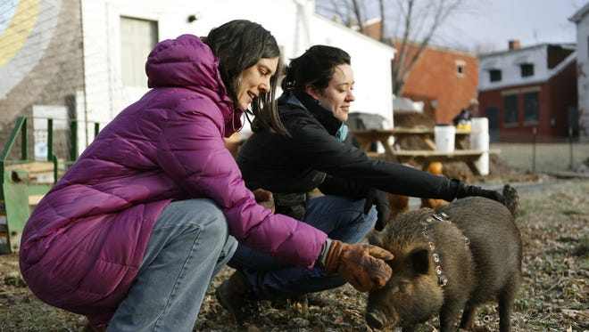 """Grow the Cov urban farm members Janet Tobler (left) and Lydia Cook say hello to the farm's pot-bellied pig, Rillette (which means """"strip of pork"""" in French)."""