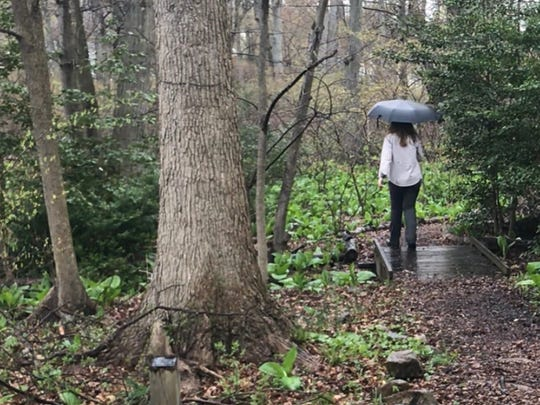Jean Epiphan, a forest ecologist from Rutgers University, walks the trails of Glen Rock's Thielke Arboretum.