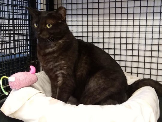 Happy is available for adoption at 11129 Michigan Avenue,