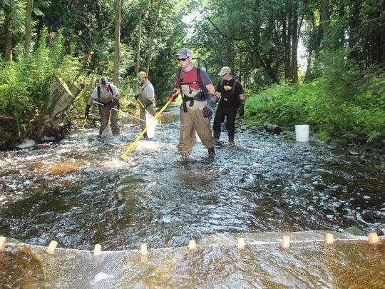 UW-Stevens Point researchers conduct a fisheries assessment on a 100-meter section of Stoney Creek near Algoma, Wis. The project is attempting to estimate production of trout and salmon on several Wisconsin tributaries to Lake Michigan as well as document outmigration of fish to the lake.