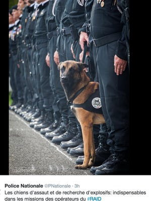 "A seven-year-old Belgian Shepherd named ""Diesel"" was killed during the raid in the Paris suburb of Saint Denis, French police tweeted on Wednesday."