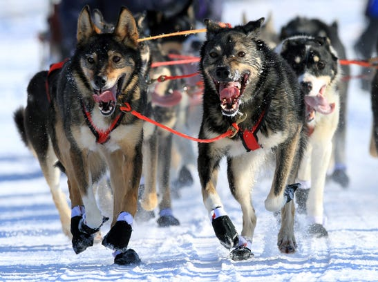 AP_Iditarod_Sled_Dog_Racing