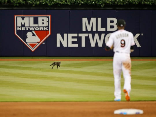 Miami Marlins second baseman Dee Gordon (9) attempts to catch a cat that wandered onto the field during the fifth inning of a baseball game against the Atlanta Braves, Tuesday, April 11, 2017, in Miami. The Marlins defeated the Braves 8-4. (AP Photo/Wilfredo Lee)
