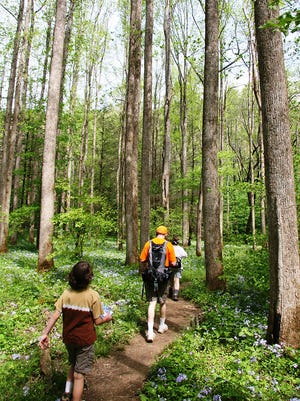 Nature hikers enjoy the mountains during the annual Wildflower Pilgrimage, and Great Smoky Mountains National Park officials are anticipating a beautiful spring. This year's Wildflower Pilgrimage is April 11-15.