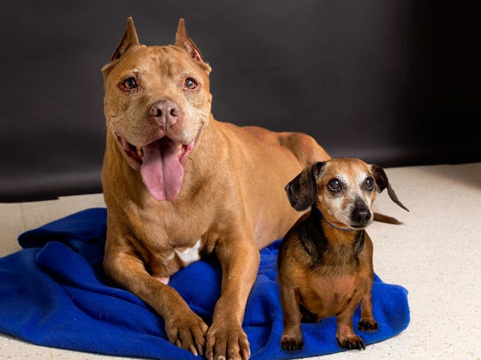 Adoptable Pets of the Week: We're Cocoa and Lacy, gentle souls, a bit shy, but nonetheless affectionate and faithful. We're 13 and we've been together forever… so we need a new family together! You can meet us any day of the week at Nevada Humane Society, located at 2825 Longley Lane in Reno. We promise you double the love!