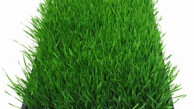 file art of grass.