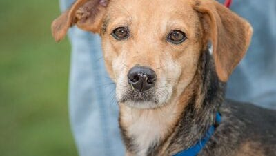 Daisy Mae needs a home. She's at the Nashville Humane Association.