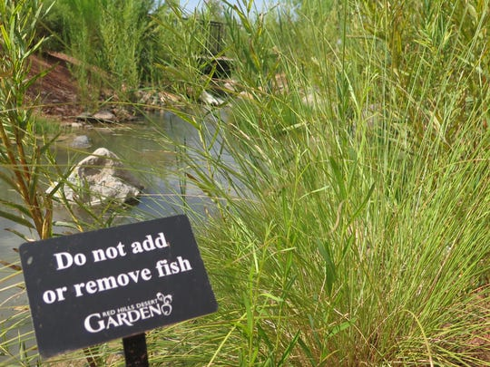 A sign urges visitors against putting fish in or taking fish out of the artificial stream at the Red Hills Desert Garden in St. George on Monday, Aug. 15, 2016.