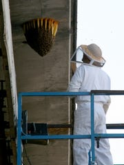 Bremerton Deputy Fire Marshal Jeff Prichard, a beekeeper