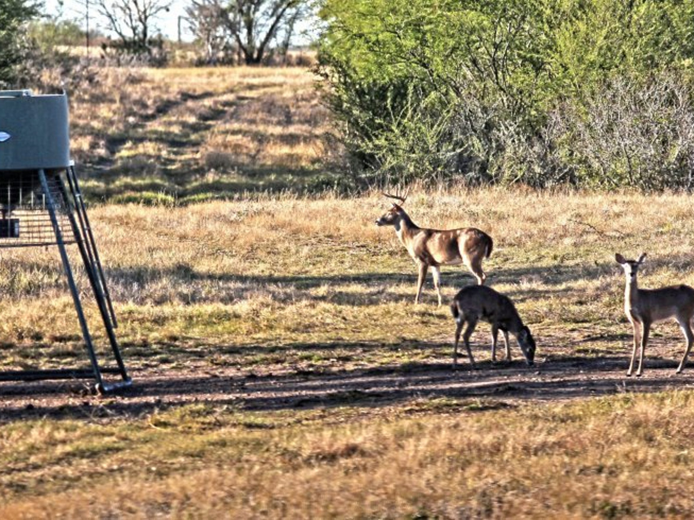 Because of abundant rainfall, deer may not be as willing to come to feeders during the early season.