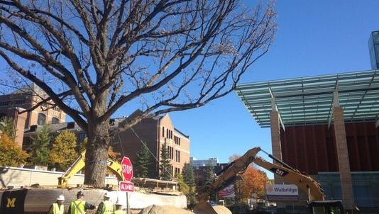 In this photo taken on Sunday, Oct. 26, 2014, Environmental Design vice president Paul Cox, second from left, and other crew members discuss their efforts to move a 250-year-old bur oak tree into its new home in front of the Stephen M. Ross School of Business on the University of Michigan campus in Ann Arbor, Mich.