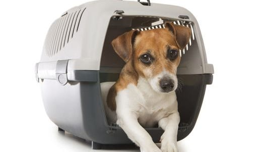 More than 2 million pets and animals are flown by carriers each year.