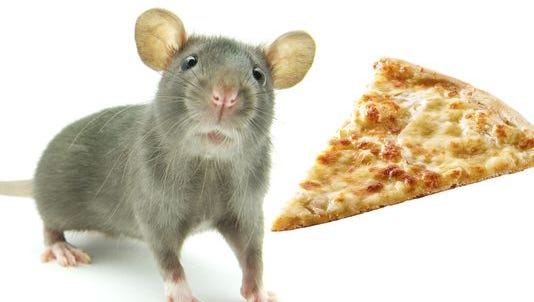 Real rat and real pizza not pictured.