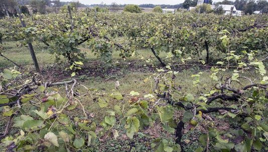 """The vineyards of Turtle Run Winery """"have the fifth oldest vines in the Indiana Uplands American Viticulture Area behind Huber's Orchard and Winery, Butler Winery, Oliver Winery and Easley Winery"""" according to its website."""