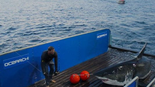 Mary Lee, a 16-foot great white shark, that is being tracked by Ocearch researchers, has returned to the New Jersey coastline.