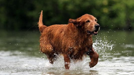 Dog beach, the only leash-free place for canines to romp at the short in Bonita Springs, is one of the top choices of city council members for improved waterway access for residents and visitors.