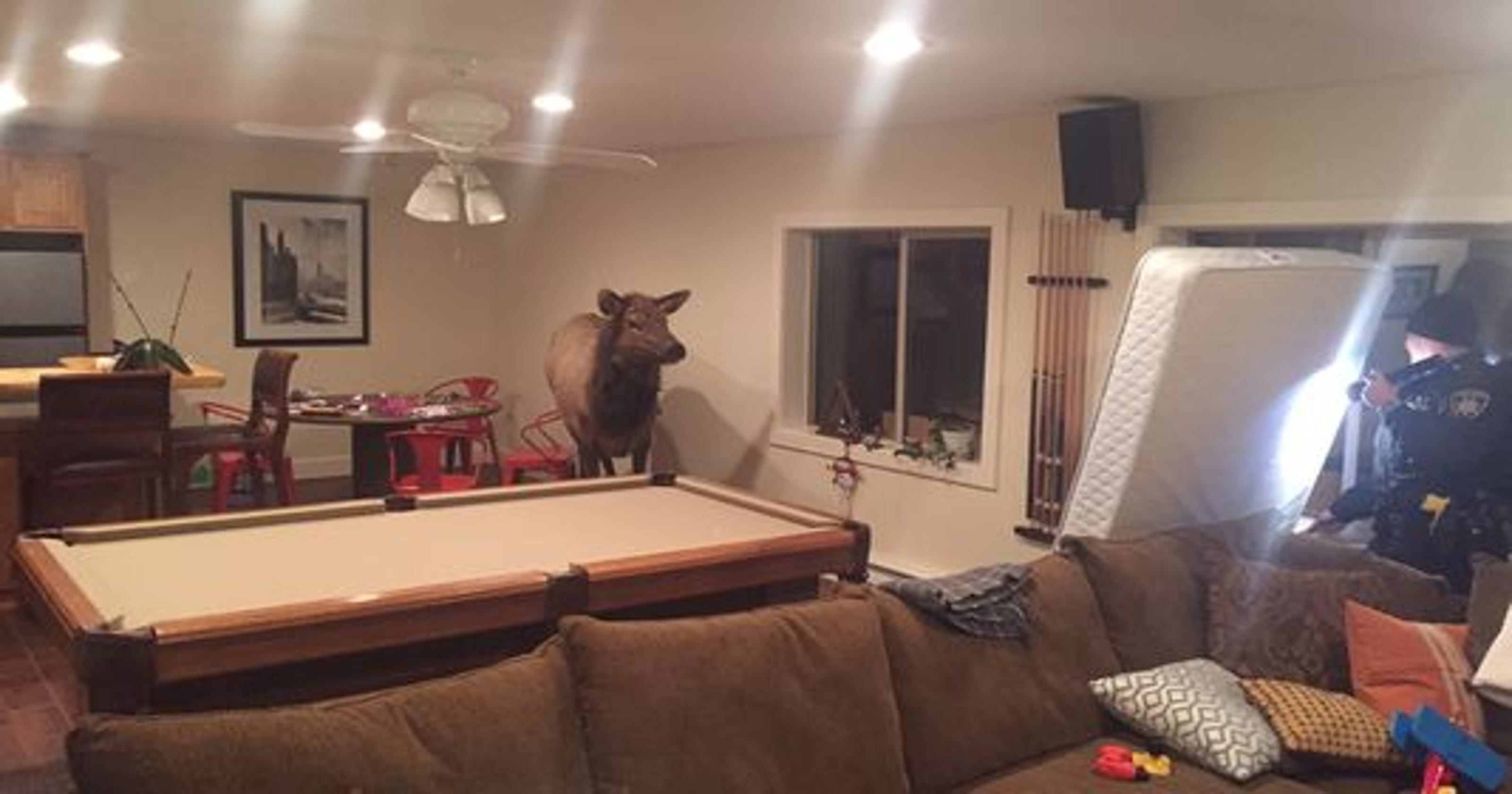 Elk falls through window into living room for Idaho fish and game jobs