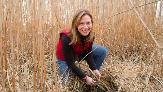Emily Heaton, Associate Professor of Agronomy at Iowa State University, checks a field of perennial grass called Miscanthus x giganteus Friday, Dec. 11, 2015. The grass can be burned with coal in power plants.