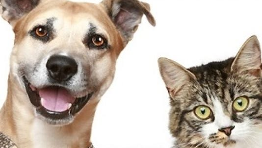 For the year, LHumane Society of Lincoln County had 809 placements, which is up from 751 in 2014.