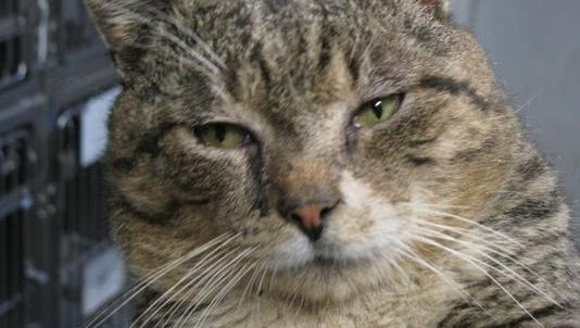 Gary Schienkofer Jr. of Shamong is accused of mistreating a neighbor's cat.
