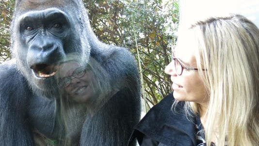 Amy Parish and gorilla friend at the Bronx Zoo, New York, N.Y., 2012.