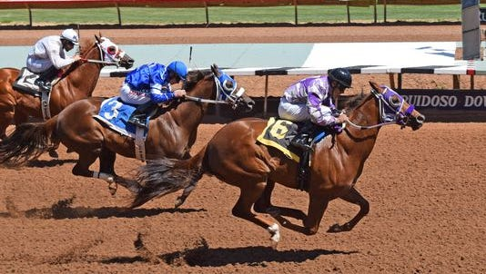 Mojo Perry races to a win in the seventh of 15 trials for the Ruidoso Futurity in Ruidoso Downs, N.M. He was the top qualifier on the day with a time of 17.702.