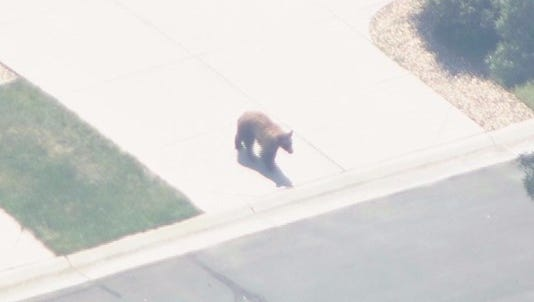 The two bears that have been seen roaming in two metro area neighborhoods have been euthanized.