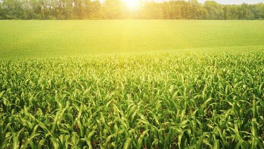 Farm field.