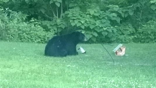 Indiana's first black bear. RIP.