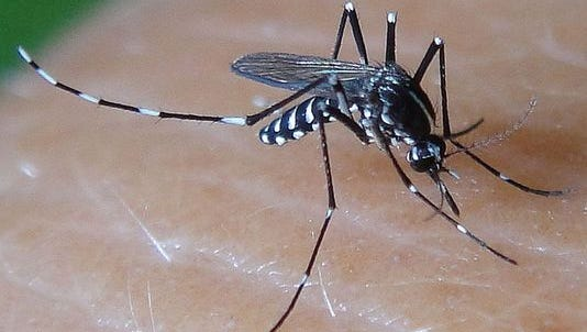 A mosquito bite can infect a person with West Nile Virus