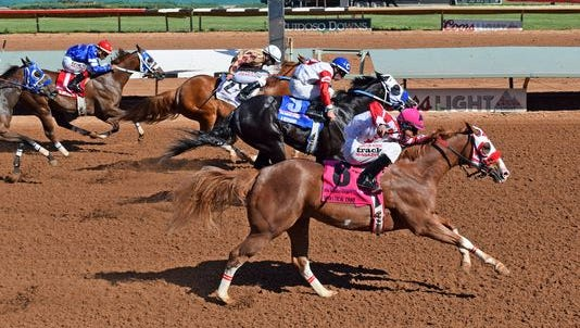 Apolltical Chad races for Nueve Racing, which purchased him for $38,000 at the Ruidoso Select Yearling Sale.