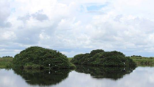 The FWC designated a pair of islands in the Stick Marsh as Critical Wildlife Areas.