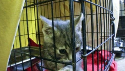 A kitten is inside of a cage.