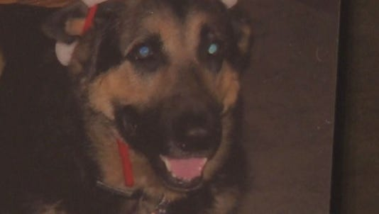 A Hudsonville woman is in trouble with the law after her dog was shot and killed by her neighbor.