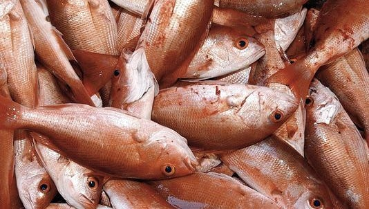 A basket full of red snapper. The Trump administration's decision to extend the recreational fishing season fr red snapper in the Gulf of Mexico is drawing fire from environmentalists, charter boat captains and commercial fishermen.