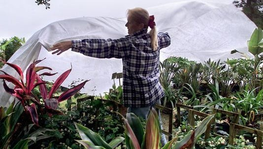 Covering plants is one way to protect them from the cold