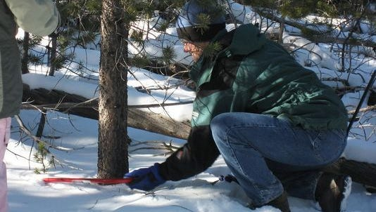 The US Forest Service sells permits each winter for Christmas tree-cutting in certain forest areas.