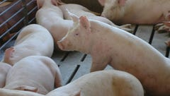 Greater Lafayette is prime for factory farms. Here's why that concerns residents.