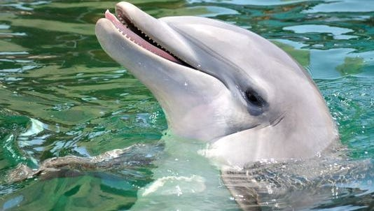 Alia, a 10-year-old bottlenose dolphin, died of a bacterial infection on May 22 at Dolphinaris Arizona, an aquatics attraction.