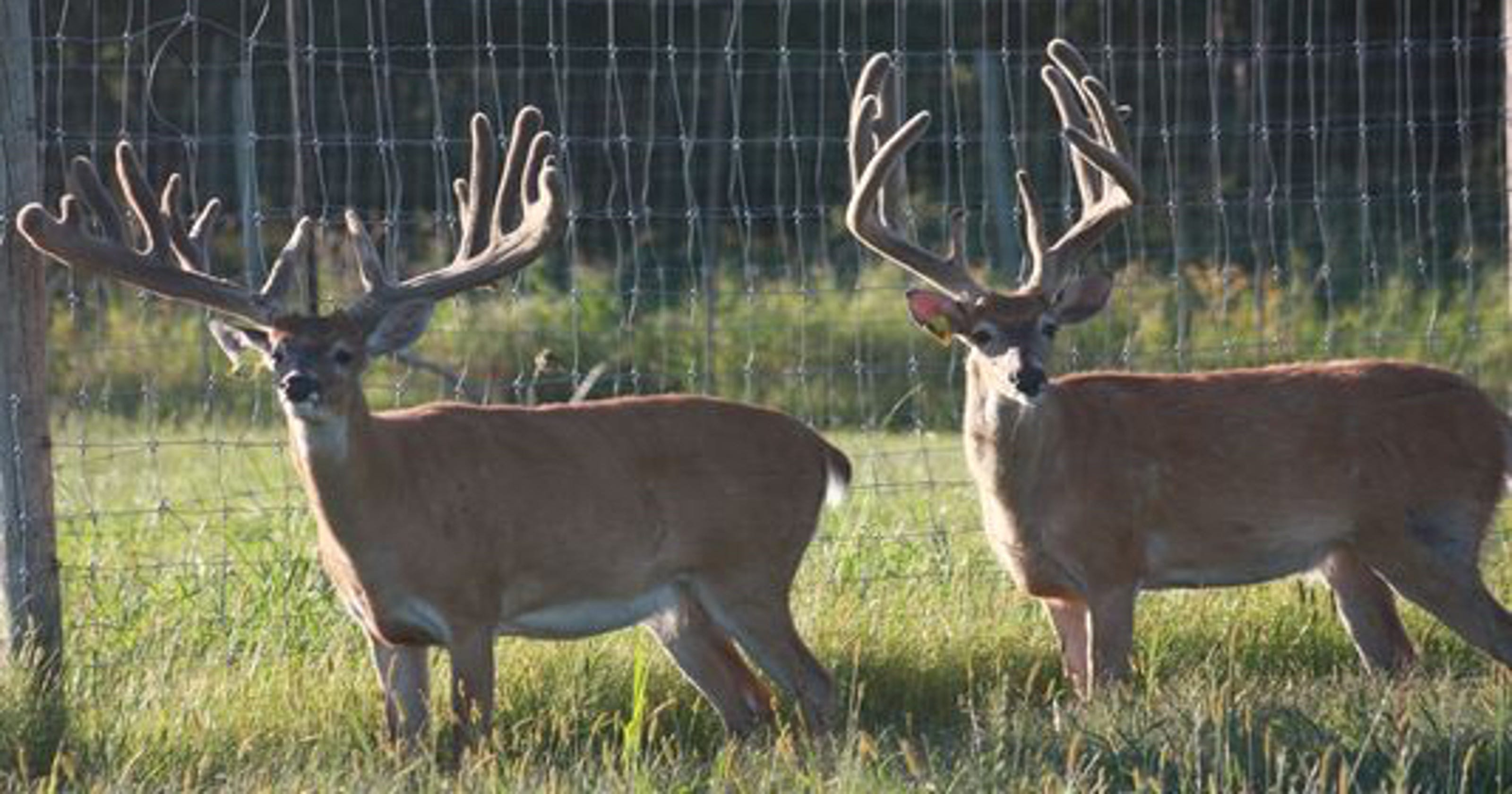 Deer farm owners paid $52,000 for depopulation in Bayfield ...