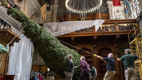 A crew at Biltmore raises the Christmas Tree earlier this year.