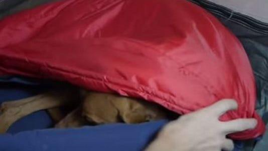 Noble camper is a dog sleeping bag