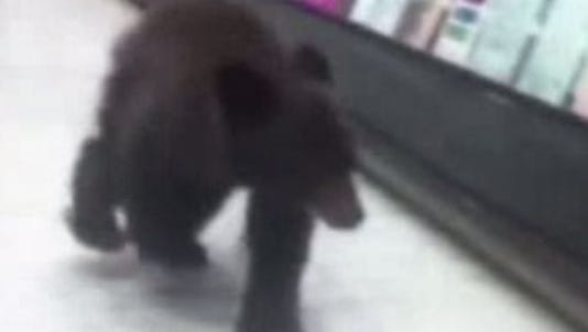 This bear cub somehow got into a Rite Aid store.