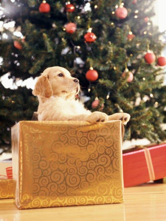 635513138544370009-gift-dog