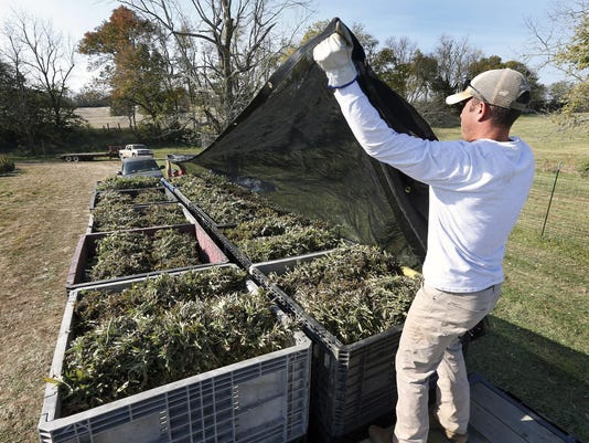 Kentucky farmers embracing state's growing hemp industry